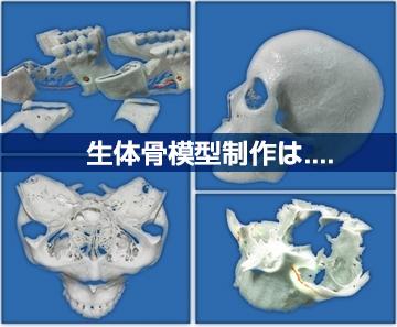 提携企業:額・骨模型製作